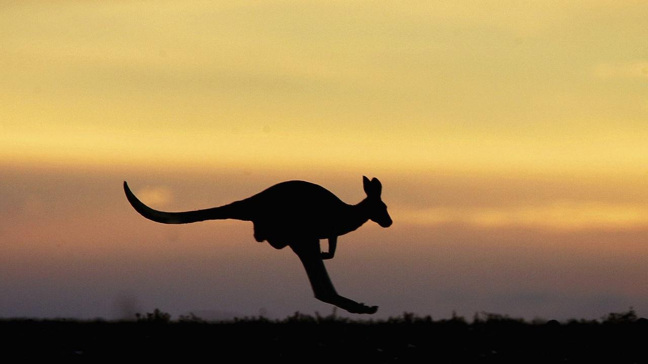 Най-древната стенна творба в Австралия изобразява кенгуру