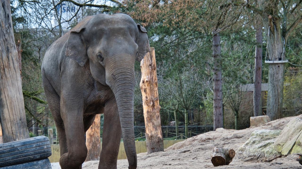 Слон уби гледача си в зоопарк в Испания