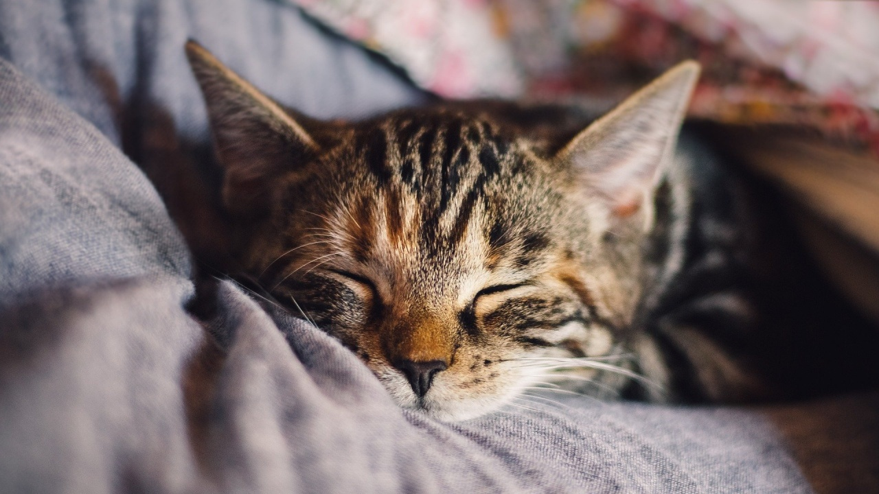 Изчезнала преди 15 г. котка беше върната на собственика ѝ