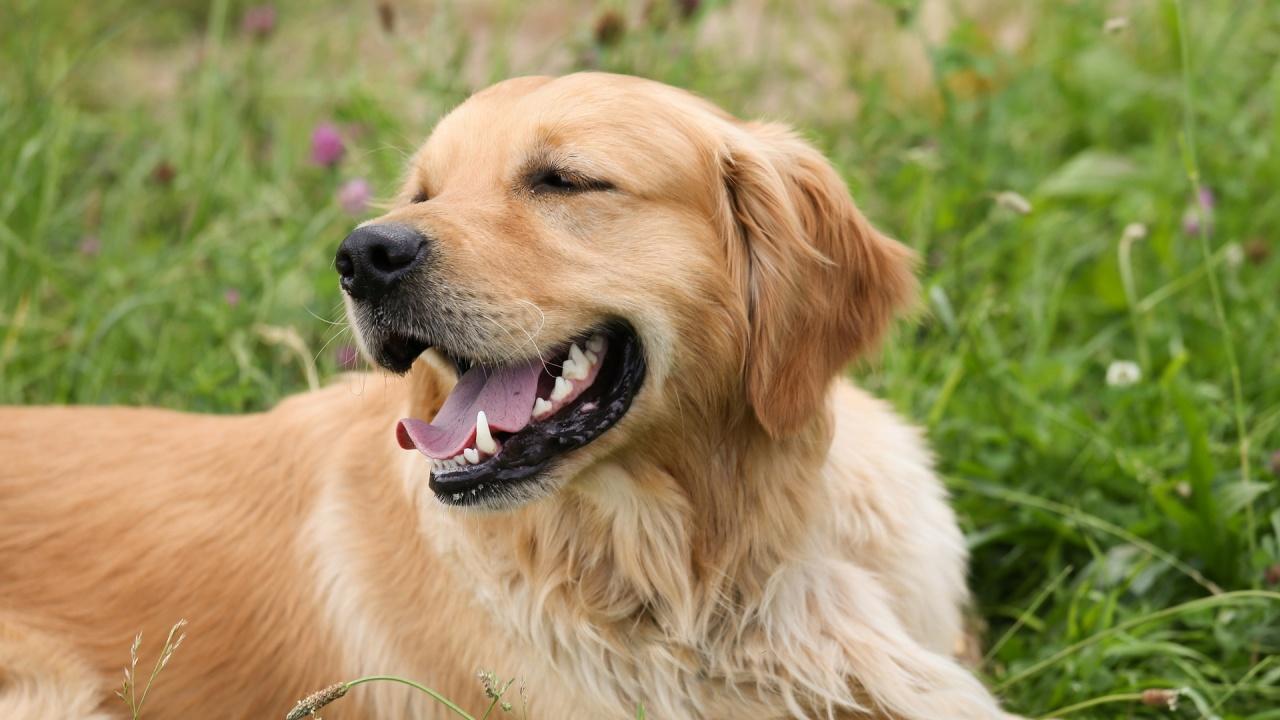 Зоопарк в Китай представя куче за лъв