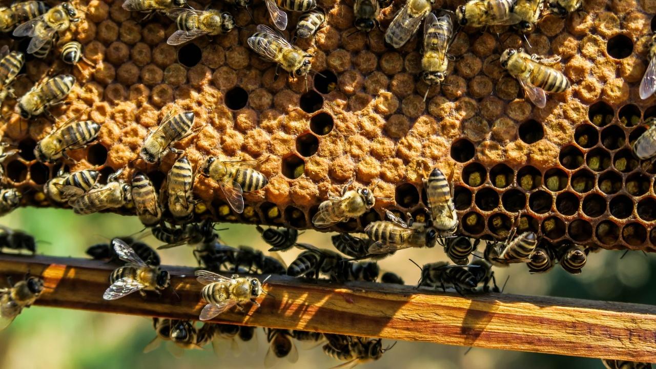 Работна група ще анализира причините за повишената смъртност при пчелите