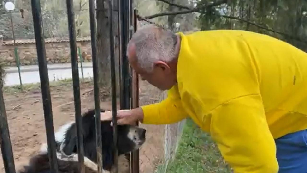 Драмите за правителство продължават, Борисов си играе с кучето Борко