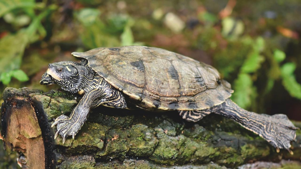 Жена е ударена от летяща костенурка
