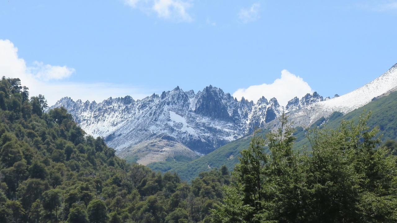 Бобри изяждат горите на Патагония