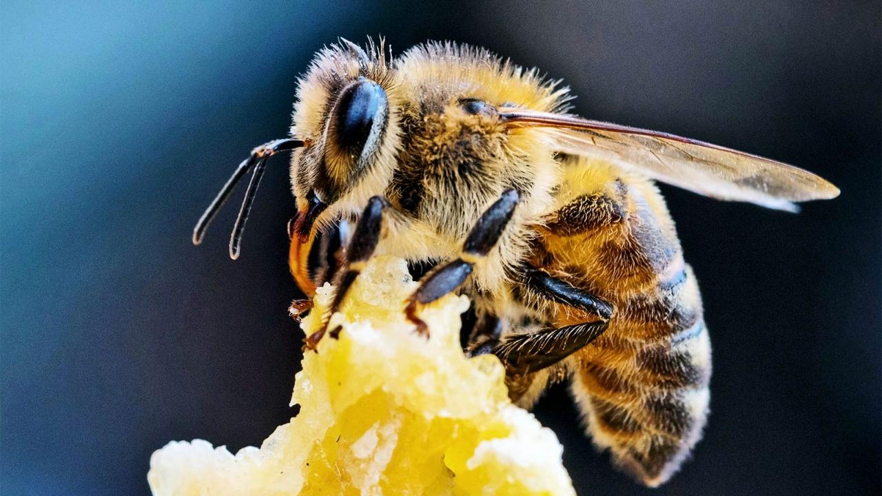 """""""Агрион"""" пуска на пазара ниви за пчелари"""