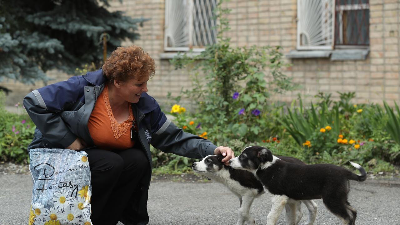 Глоба до 500лв., ако храниш бездомни кучета в Кричим
