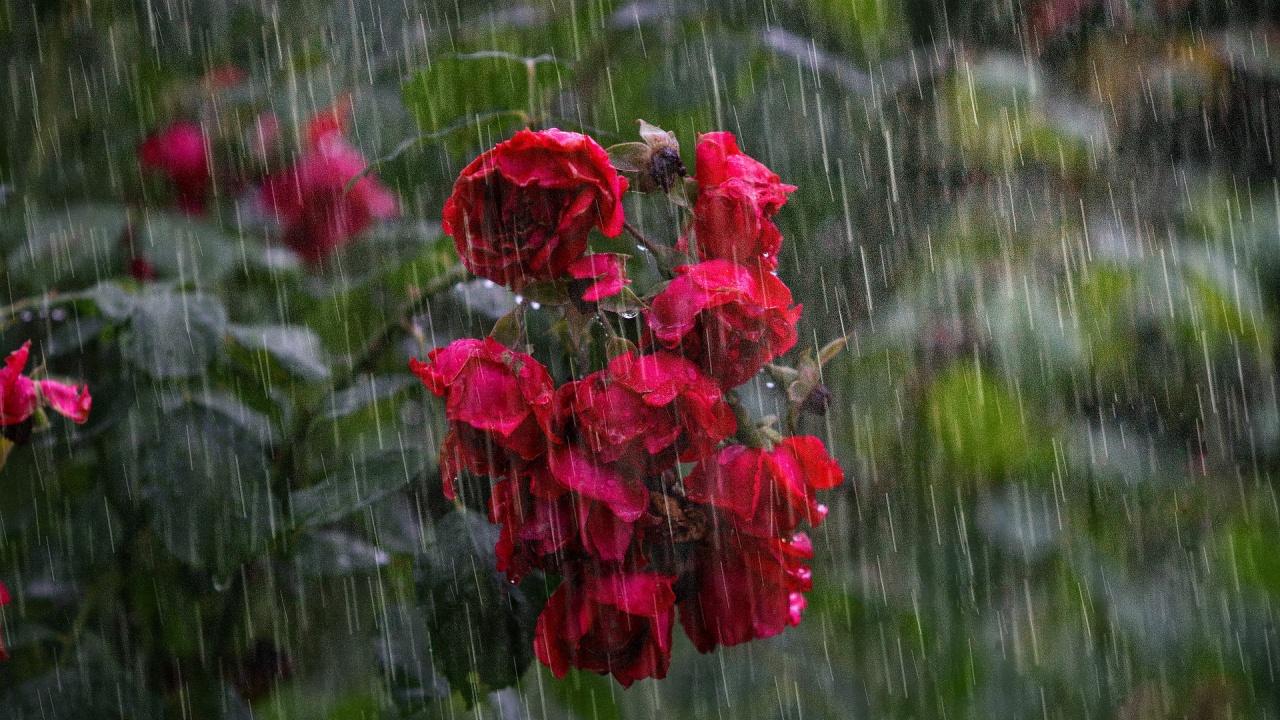 Докога ще продължат валежите?