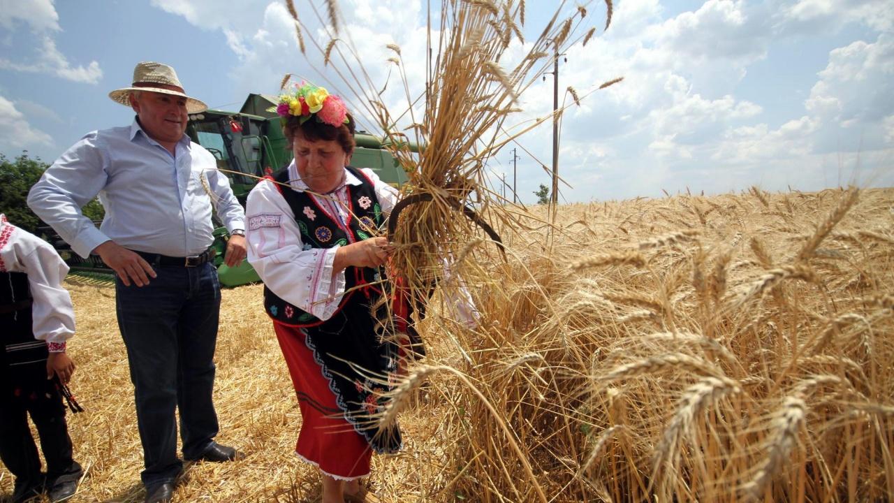 С фестивал на жътвата в Тервел ще започне прибирането на новата зърнена реколта