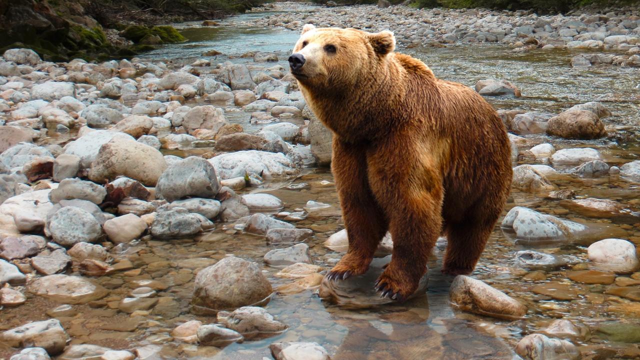 Засилва се контролът по Закона за лова и опазване на дивеча в района на Смолян