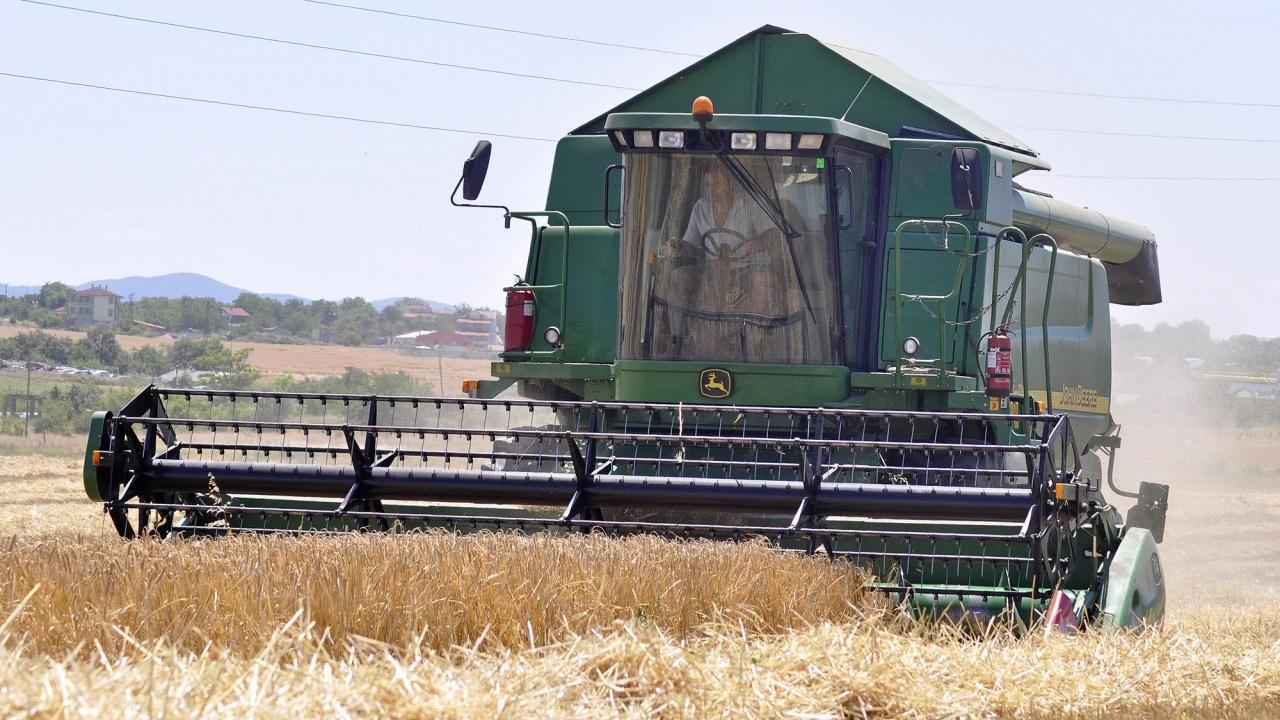 Зърнопроизводителите в Добричка област очакват трудна жътва след падналите валежи