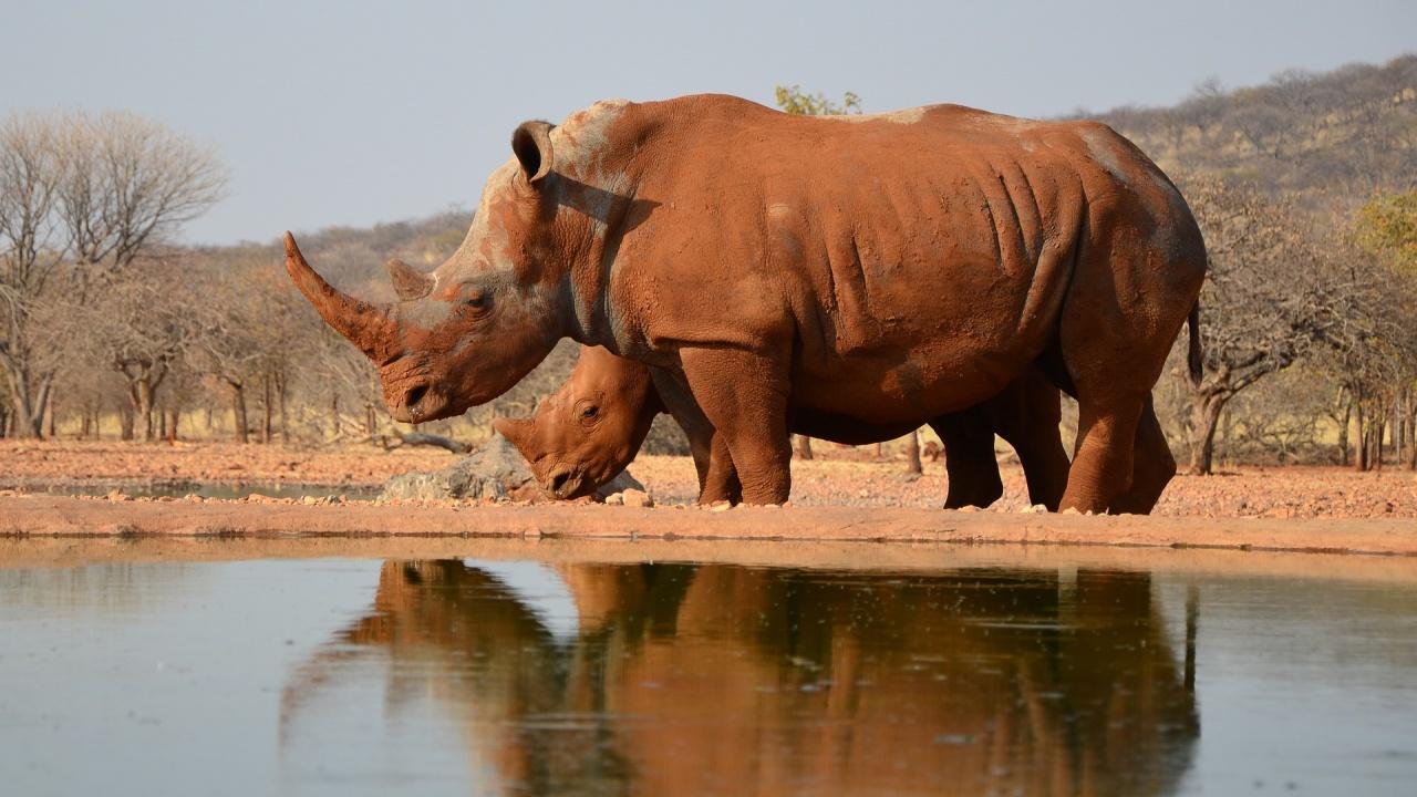 В Китай откриха останки на нов вид гигантски древен носорог