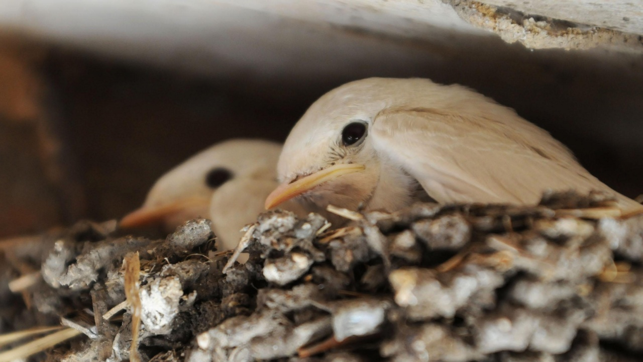 РИОСВ - Пловдив спаси 8 бедстващи птици
