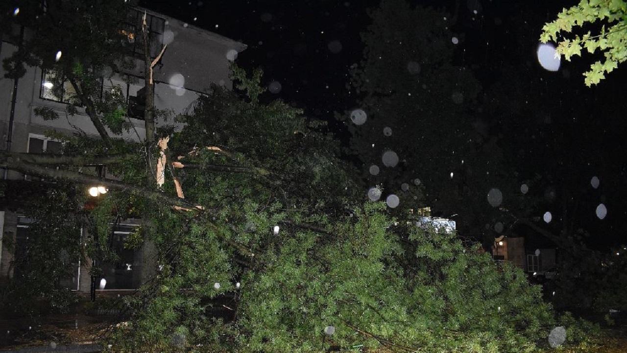 В Разград разчистването на щетите от бурята продължава и в почивните дни