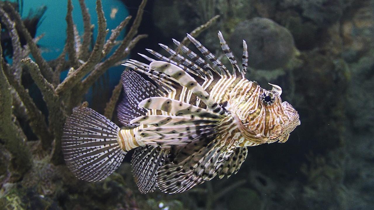 Най-опасните риби в света мигрираха край турското крайбрежие