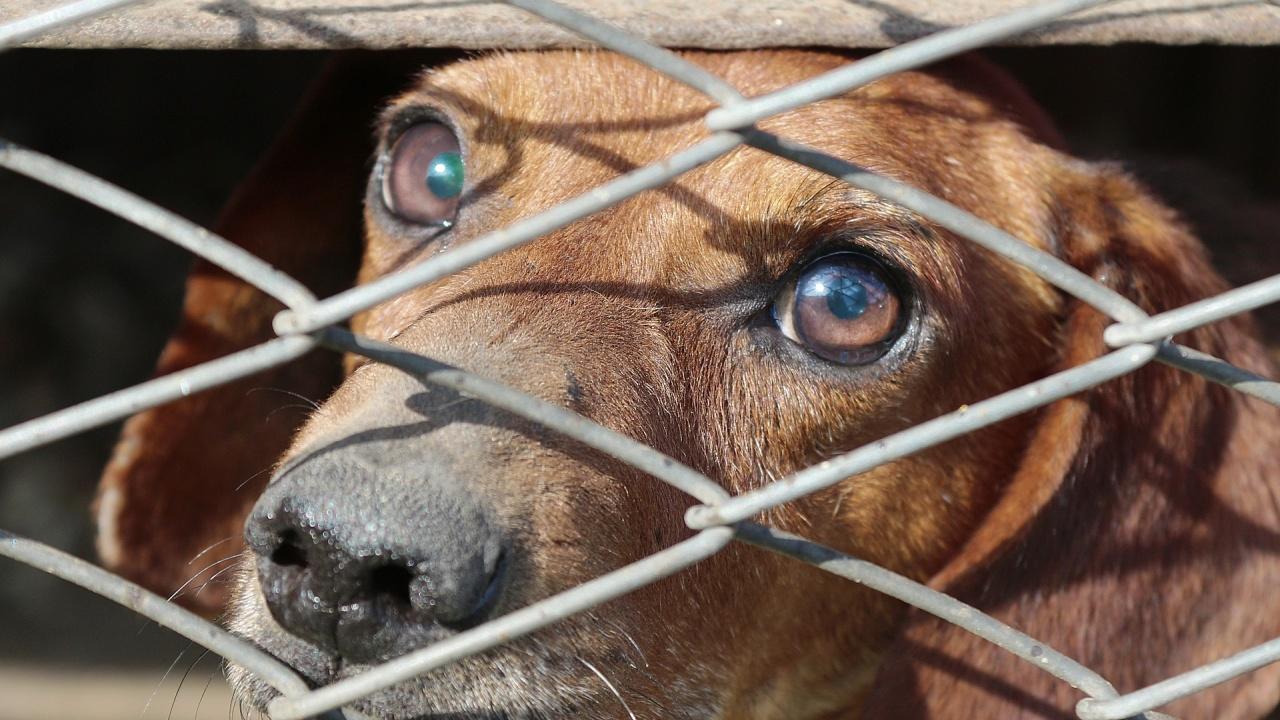 Затвориха кучета в клетки и контейнер на жегите. Кметът на Самоков: Само за ден