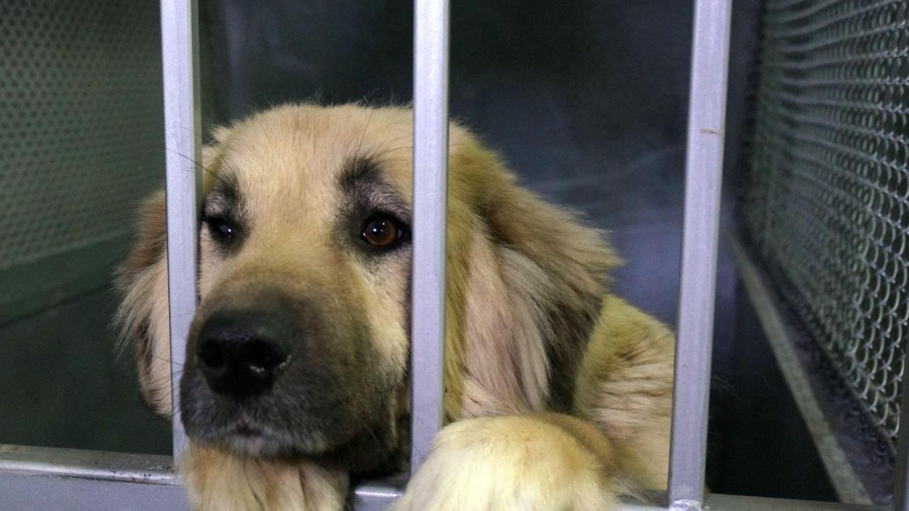 Стопанка на осиновено куче получи акт за неполагане на грижи за животното, което причини инцидент