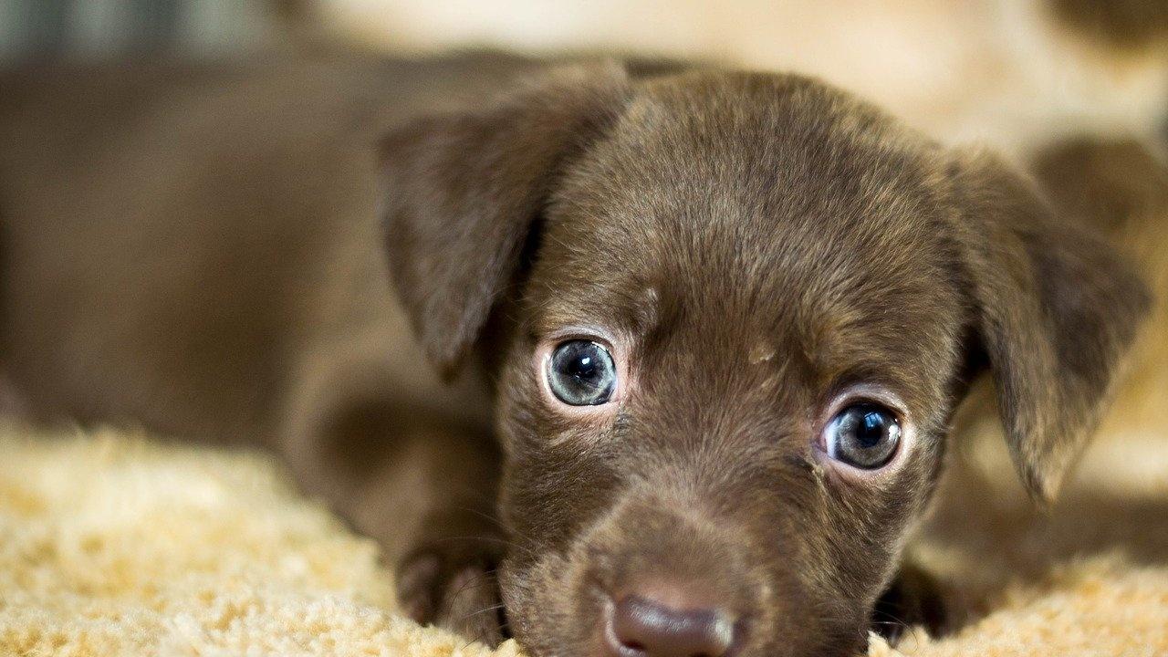 Увеличава се броят на осиновените кучета в Ямбол