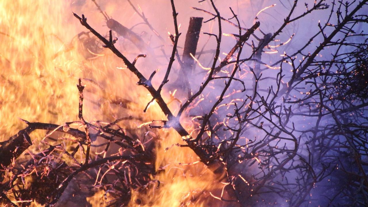 Извънредно положение в много области в Русия заради горски пожари