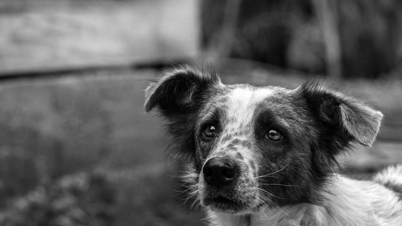 Обвиниха пенсионерка в убийство на две кучета в Софийско