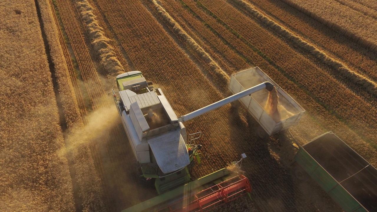 Зърнената реколта в Добричка област е прибрана в повече от половината масиви при среден добив 606 килограма
