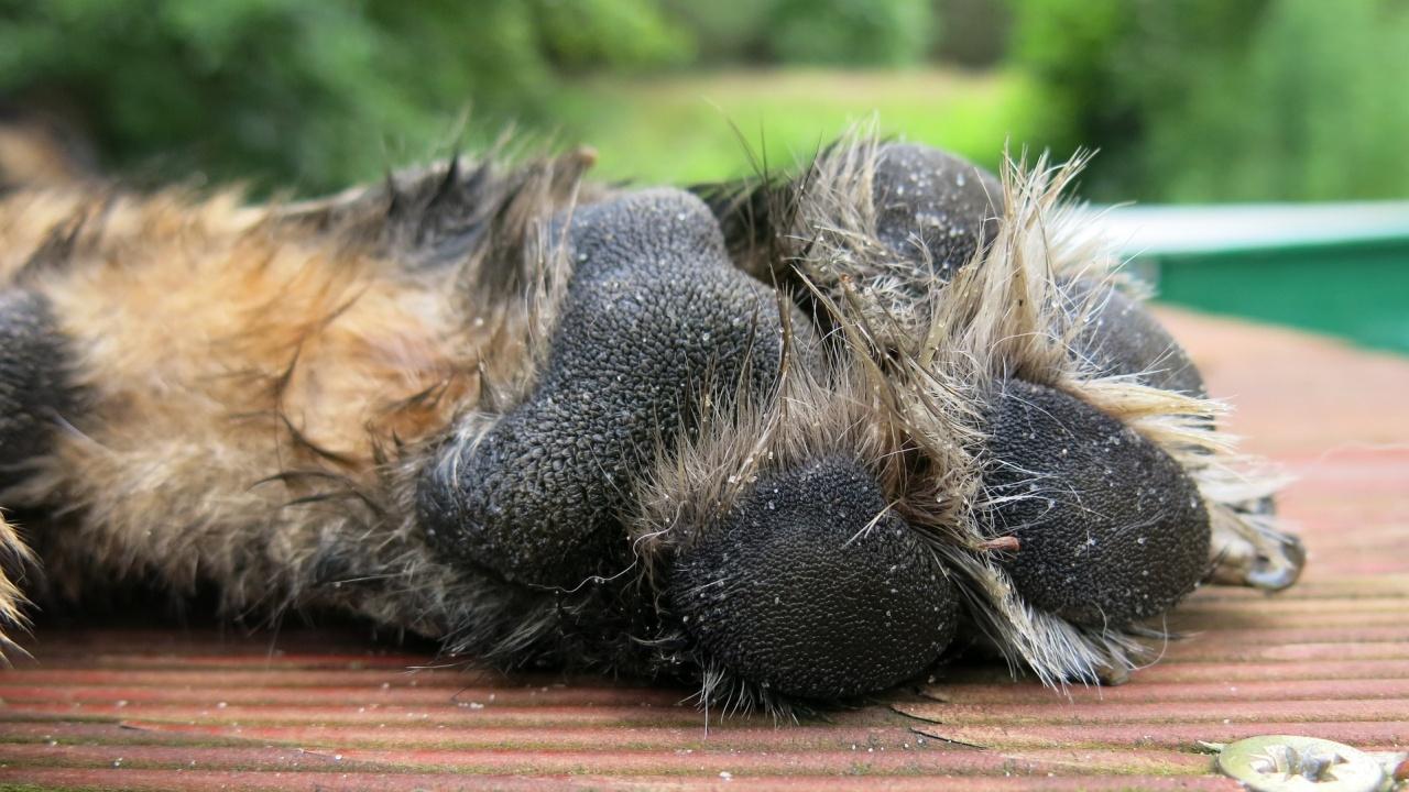 Мъртви и ранени кучета са открити в Смолянско