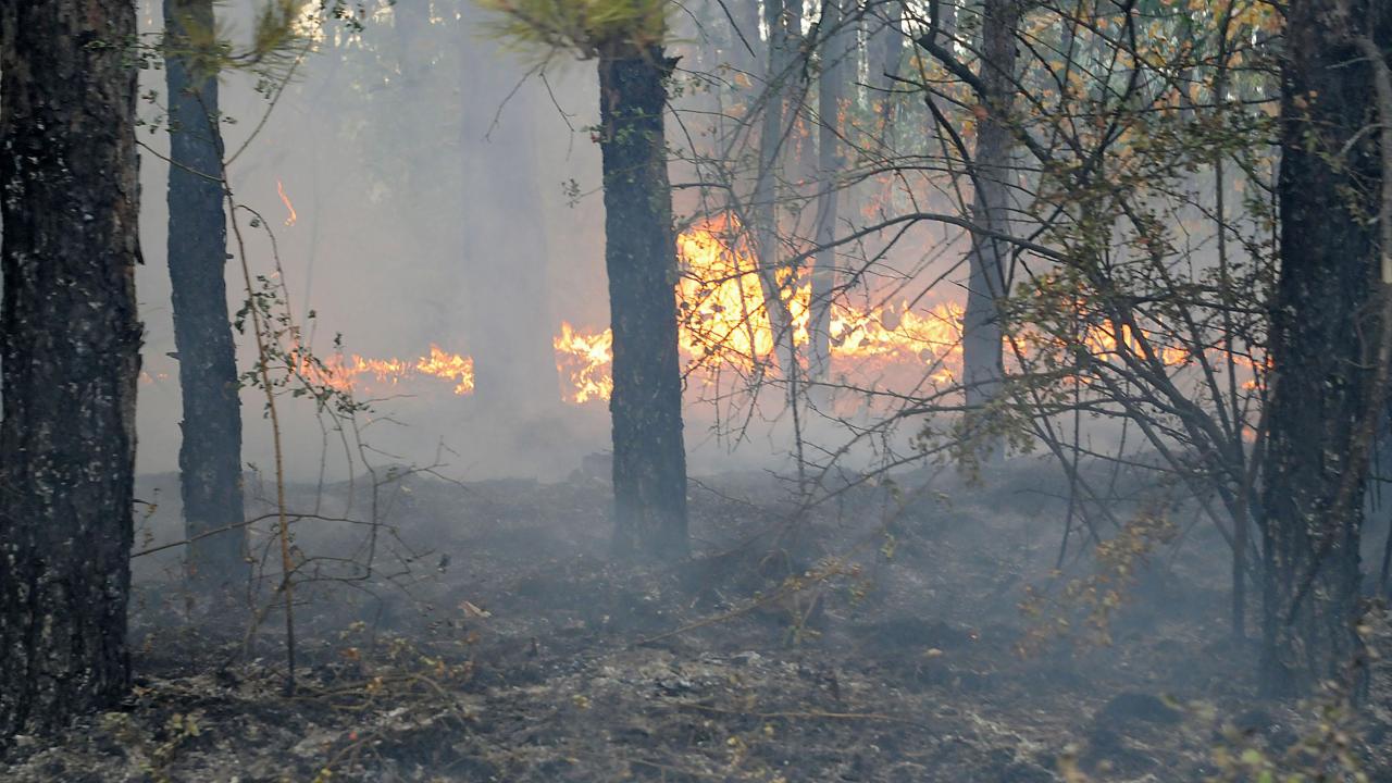 Нов горски пожар пламна в Сакар