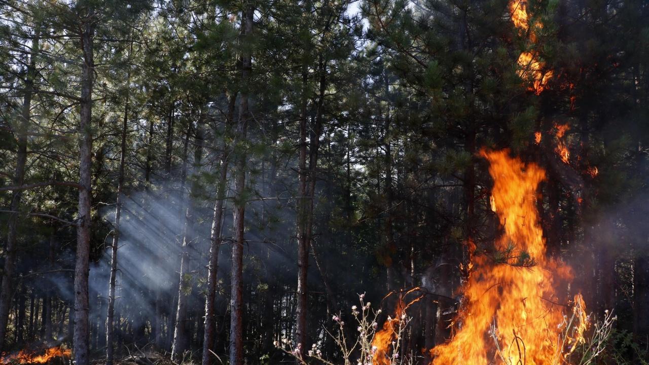 """Пожар горя в ловешкия парк """"Стратеш"""""""