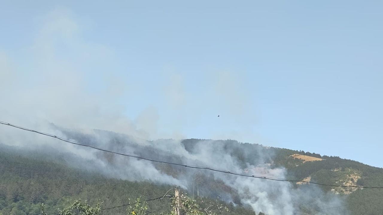 Пожарът край Твърдица обхвана 500 дка борова гора, общината моли за помощ