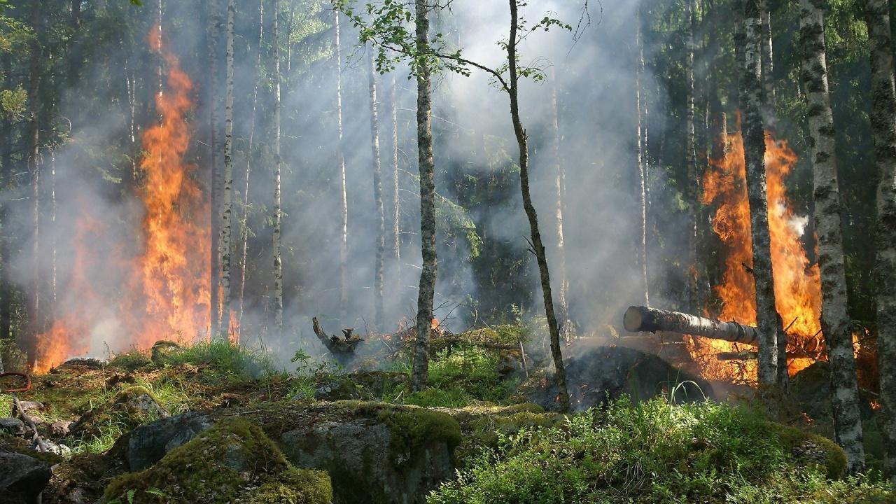 В Плевенско за едно денонощие са регистрирани 14 произшествия с пожари