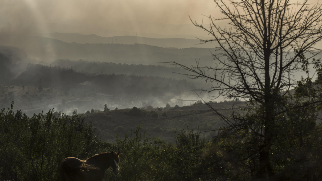 Над 6 хил. декара са засегнати от пожари в Пловдивска област