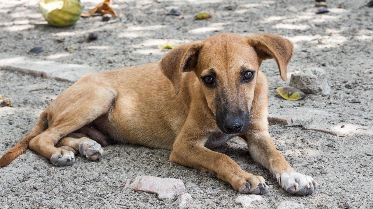 Над 670 домашни и дворни кучета са кастрирани в Перник