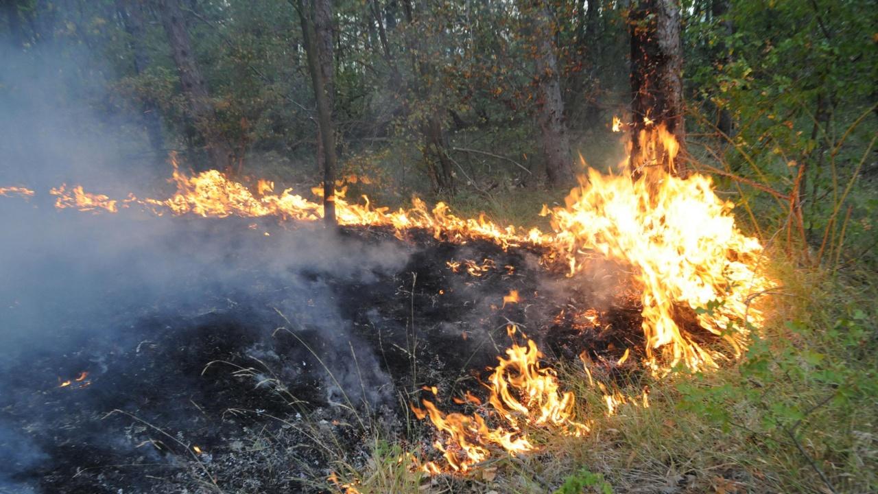 Продължава помощта на военните за гасенето на пожара над село Розино