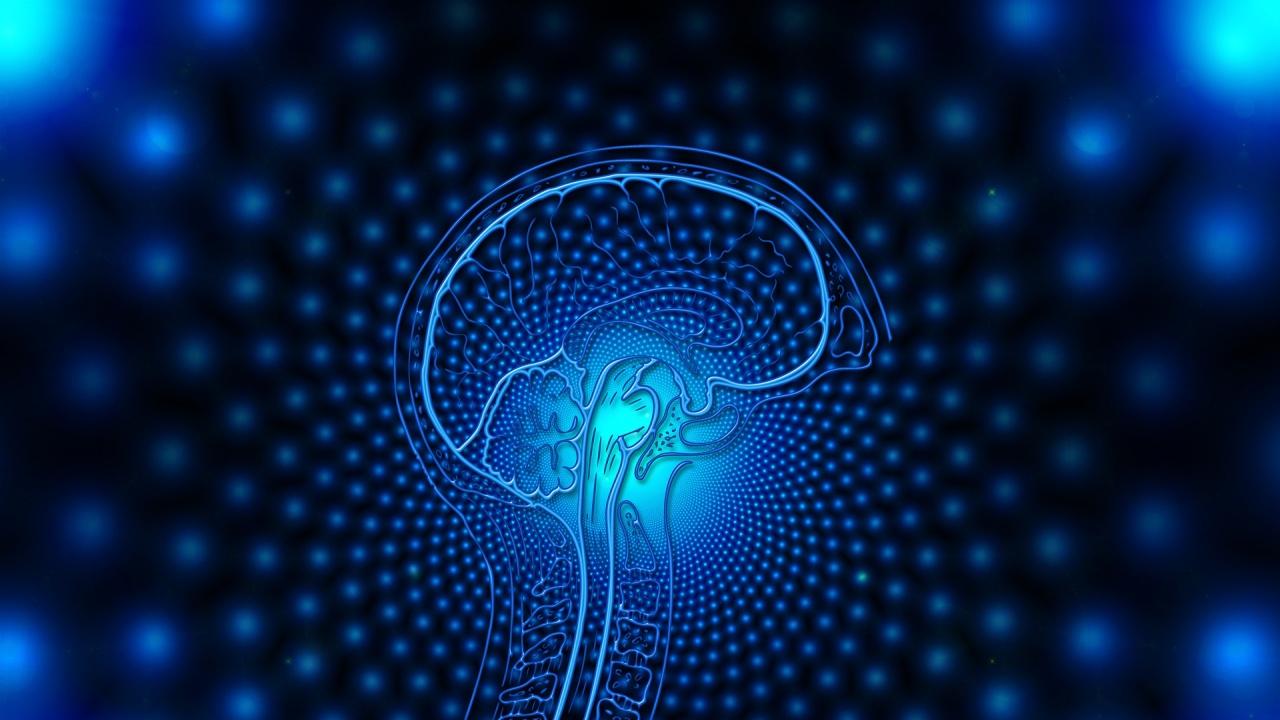 Учени създадоха първата в света триизмерна карта на мозък на примат
