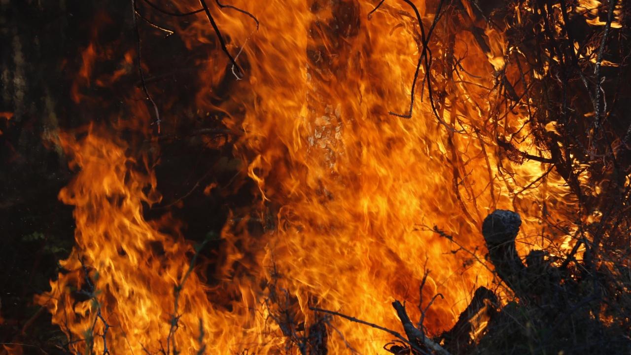 Двама горски загинаха при гасене на пожар край санданското село Петрово, техен колега е с тежки изгаряния
