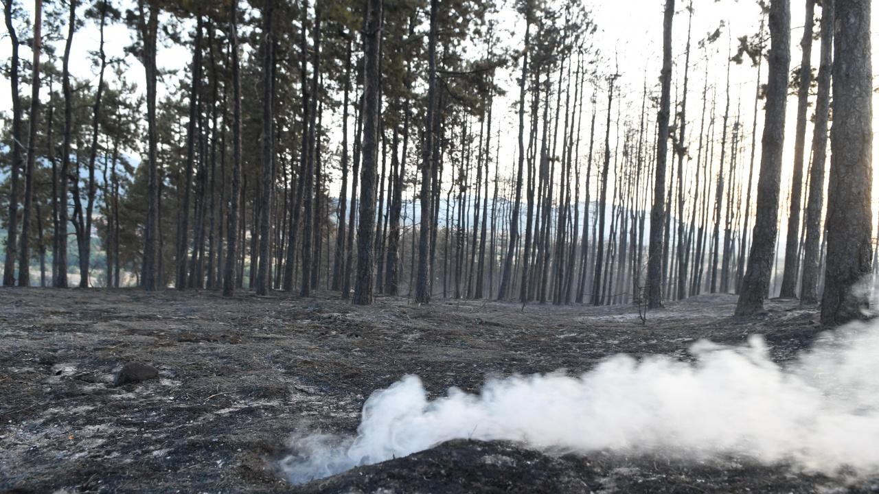 След пожара: Огромни щети за землището на село Старосел