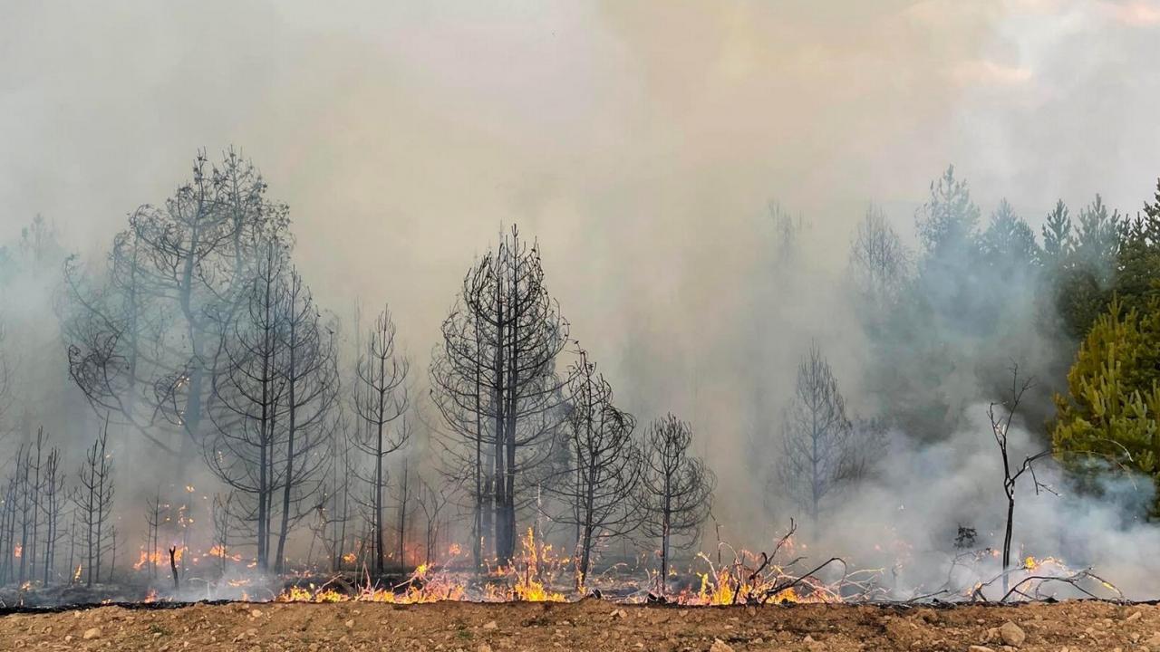 Посланикът ни в Република Северна Македония посети района на Пехчево и Делчево, където български пожарникари се борят за погасяване на пожар