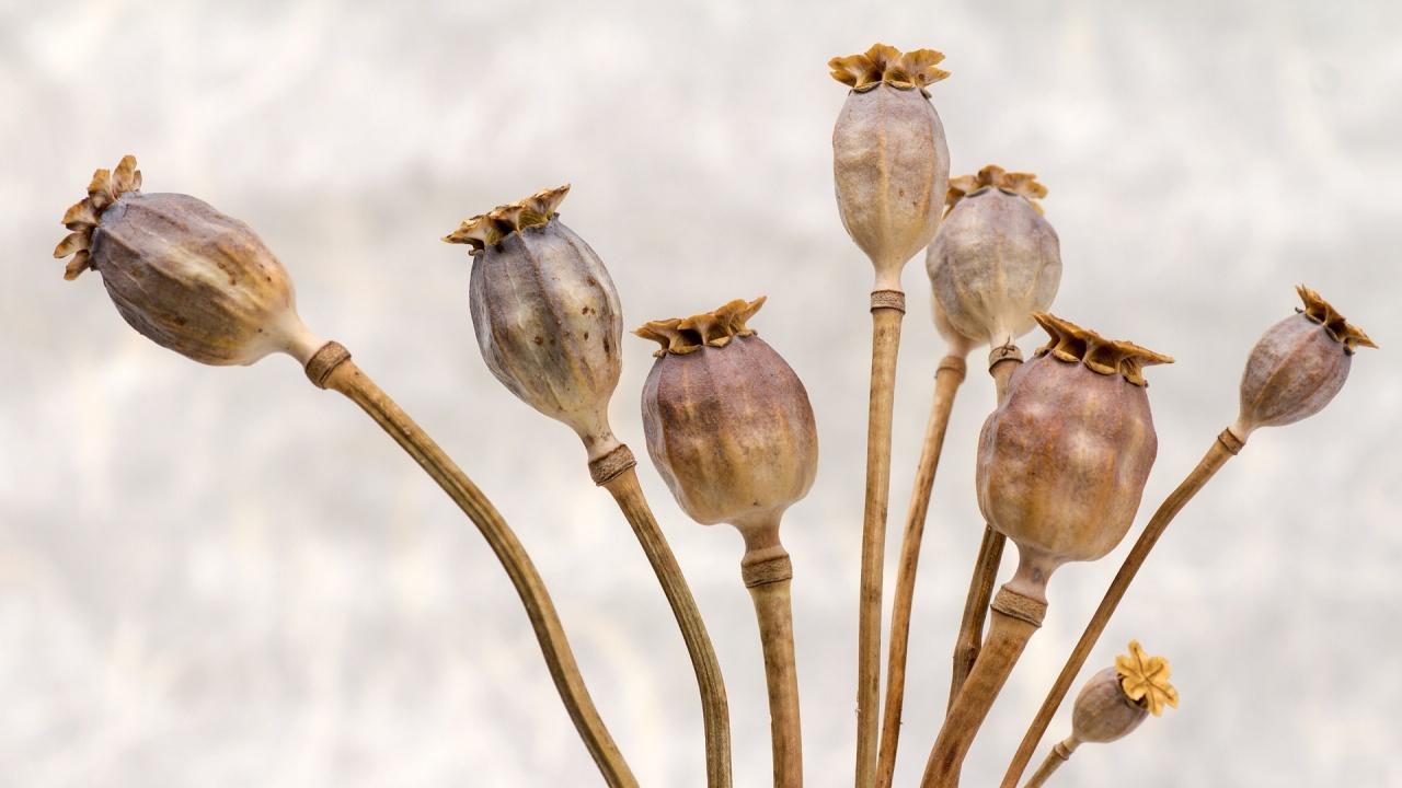 Археолози откриха в Мексико букети цветя на 1800 години
