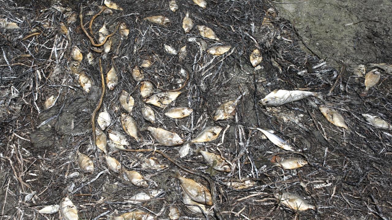 Хиляди риби загинаха в Испания