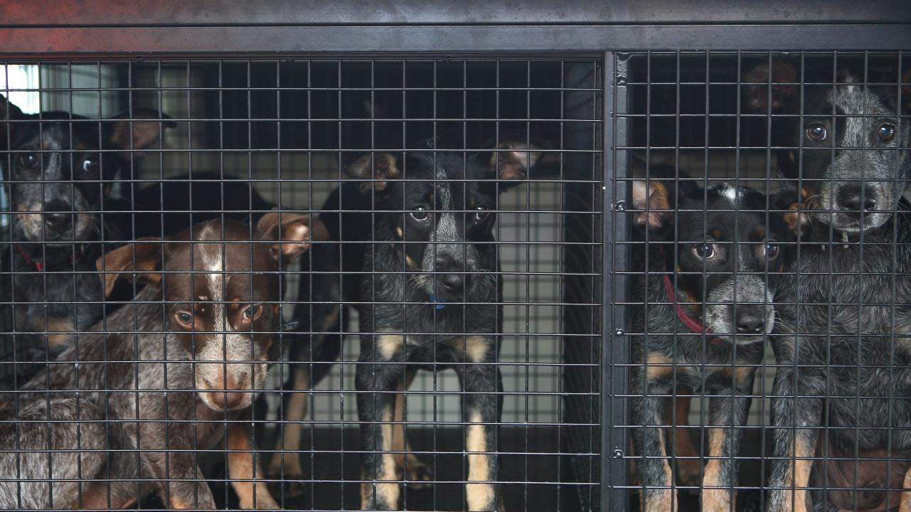 Убиха 15 бездомни кученца в приют, за да не се трупат желаещи да ги вземат