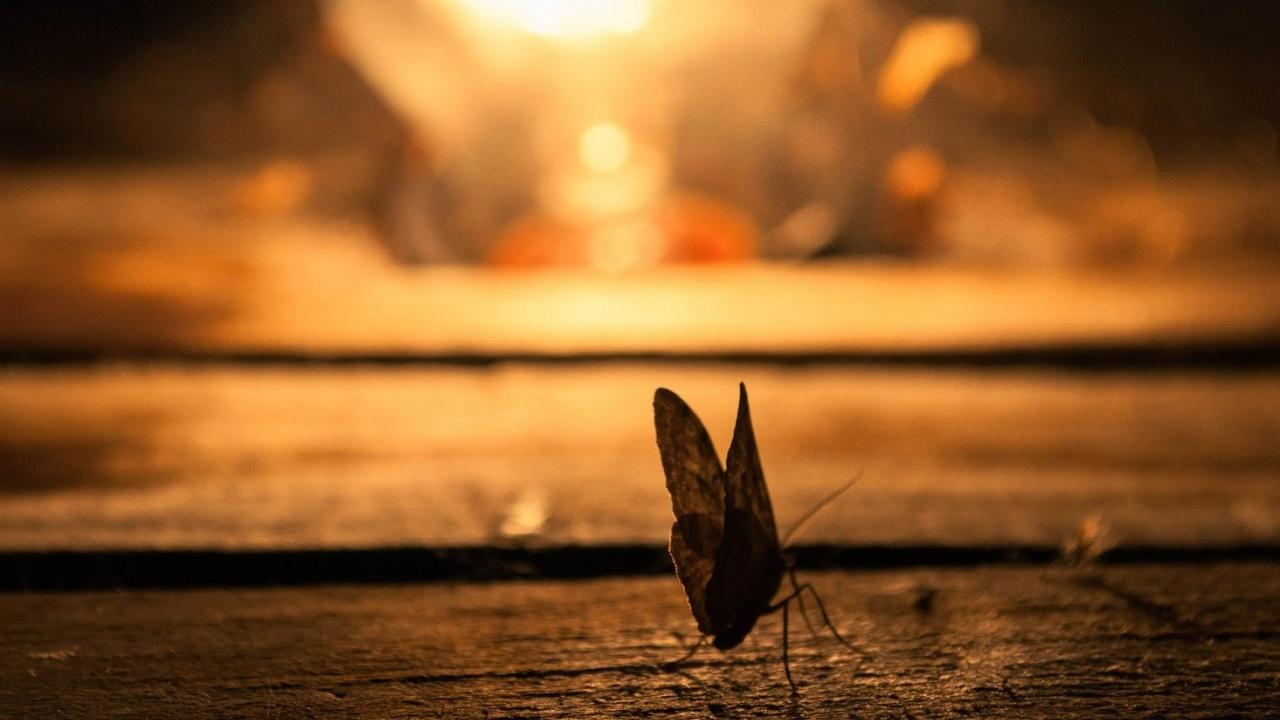 Светлинното замърсяване допринася за намаляването на насекомите