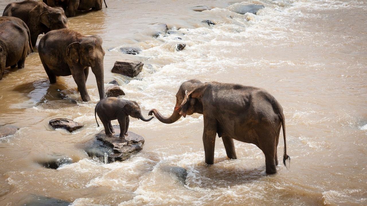 Бебе слонче бе спасено в Китай, след като бе изоставено от стадото си