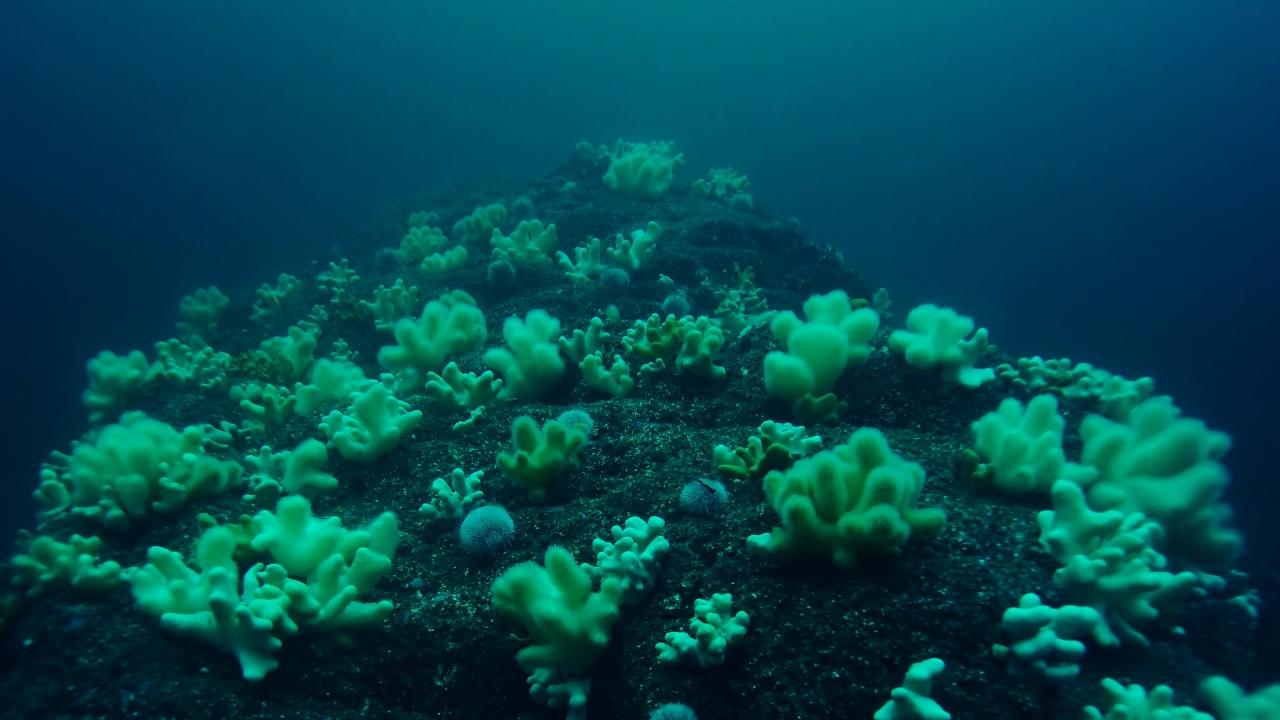 Учени съставиха подробна карта на коралите в света
