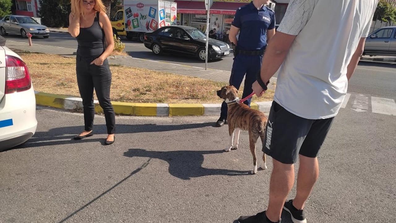 Община Асеновград проверява домашните кучета с четец за чипове