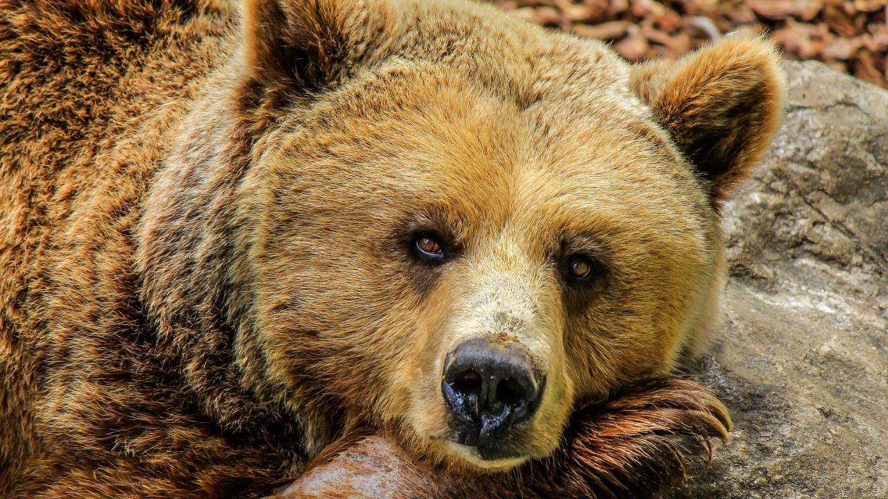 Какво да правим, ако мечка изскочи на пътя ни