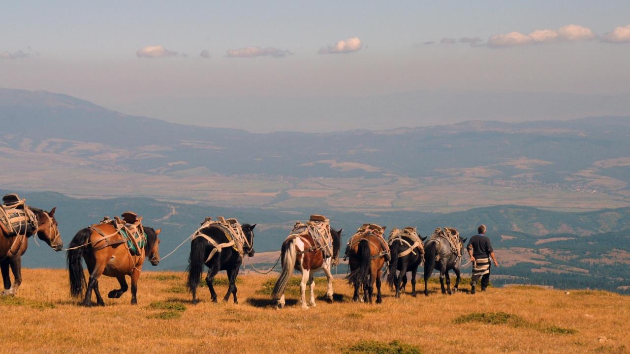 Стоки от първа необходимост се доставят с мулета и катъри до планиски заслони и хижи в Рила