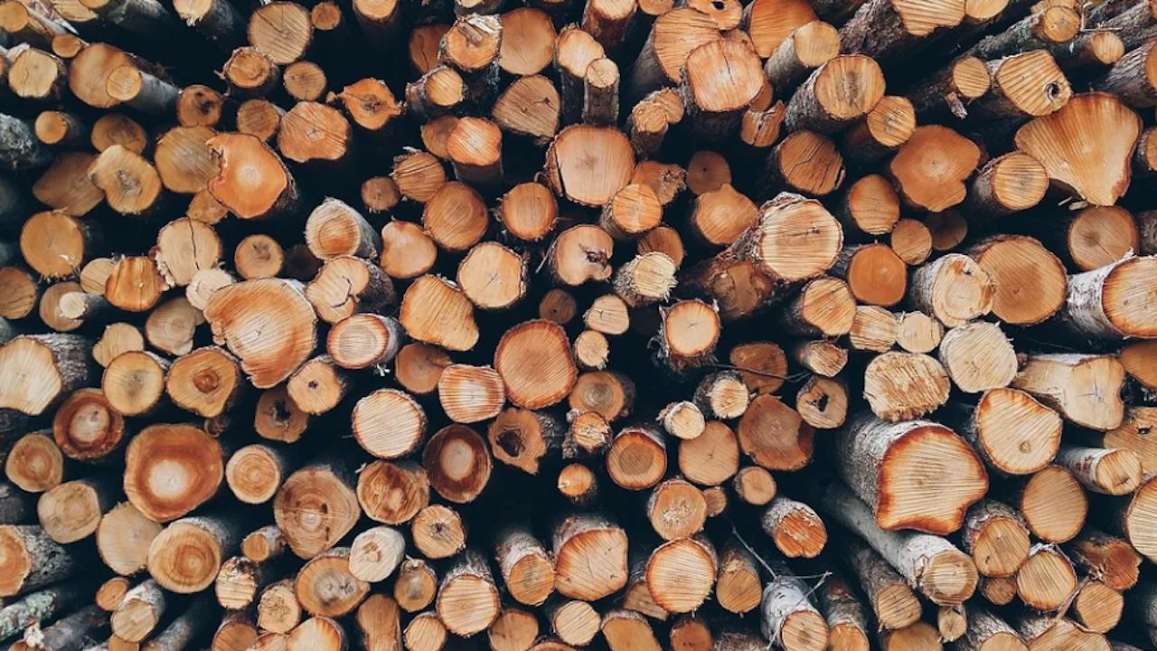Над 48 000 кубични метра дърва за огрев са доставени на над 7 500 домакинства в Североизточна България