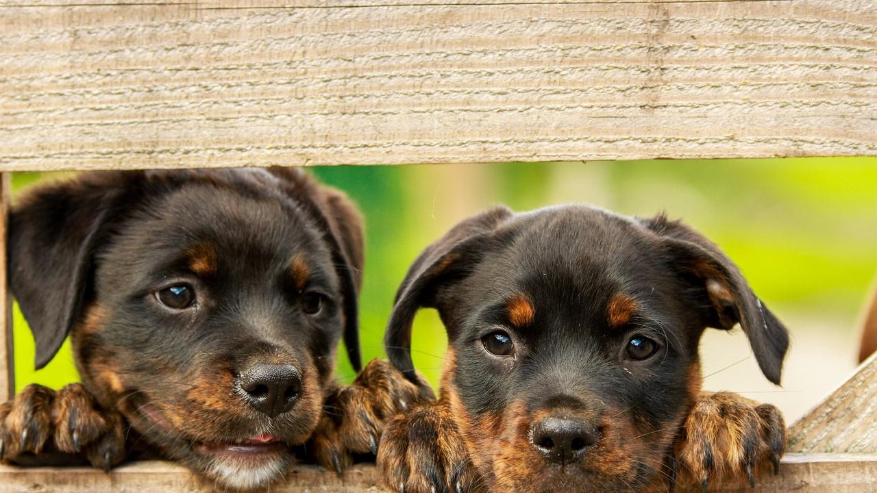 Броят кучетата в Благоевград