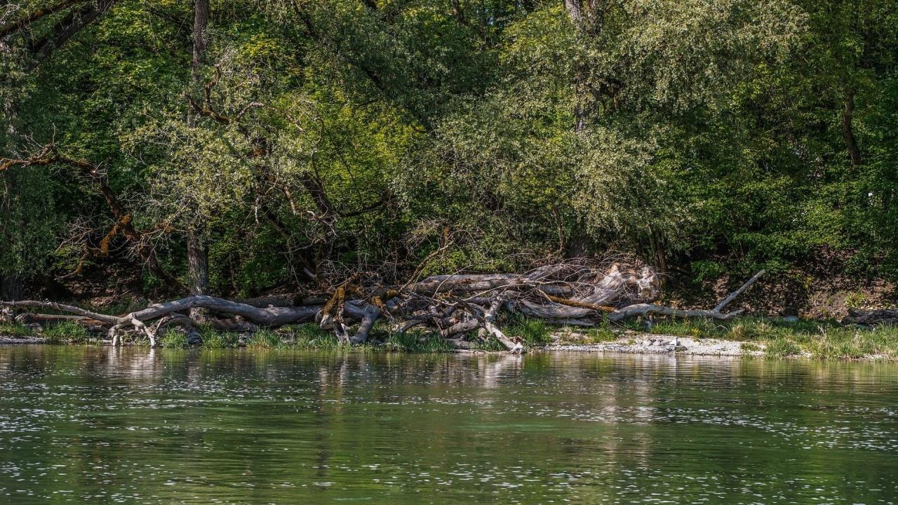 Доброволци от Трявна почистиха четириметрова речна зона в града