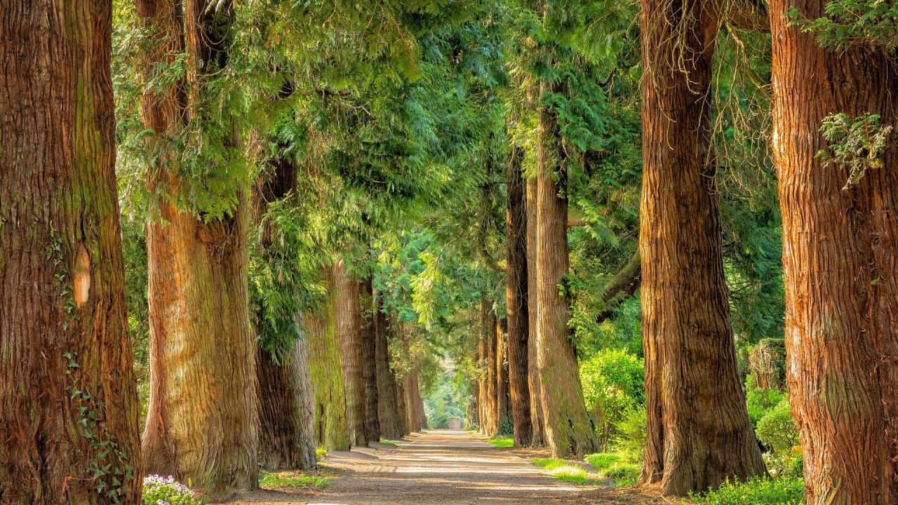 Премахват опасни дървета в Перник