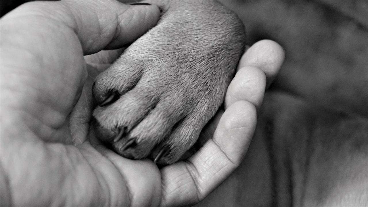 Убиха кучета в Божурица, Сливен и Търговище